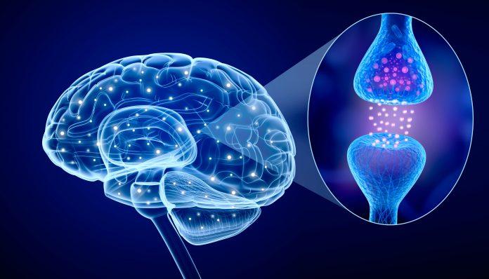 science brain friendship molecule relationship social anxiety shyness
